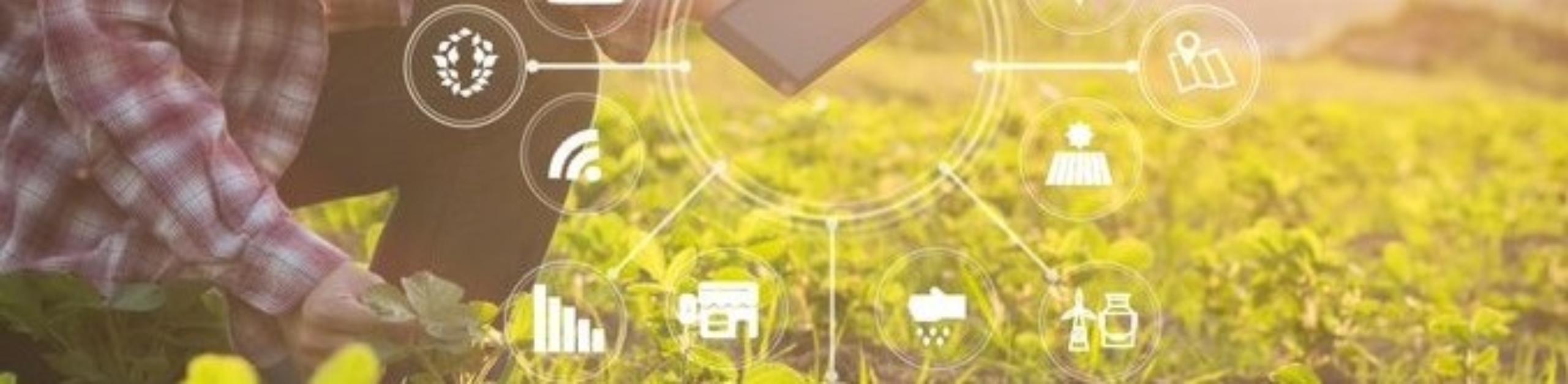 """Los 5 factores en común de las empresas alimentarias que van a salir  reforzadas en este """"entorno de visibilidad limitada"""""""